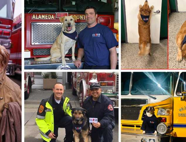 Firehouse K9s Share CBYD Message for #NationalPetDay